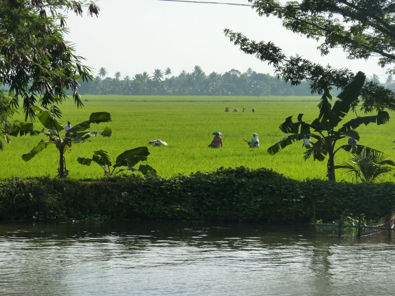 Alleppey - Backwaters